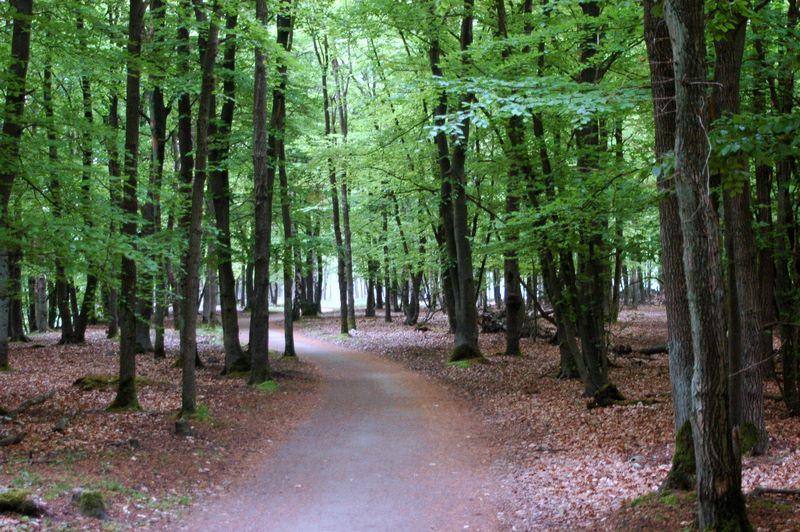 De bossen